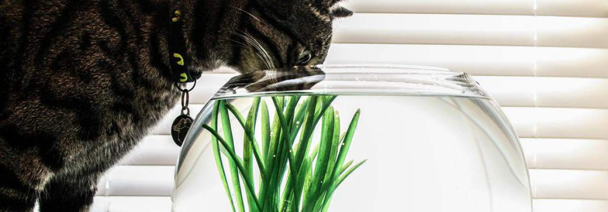 Cat in Fishbowl