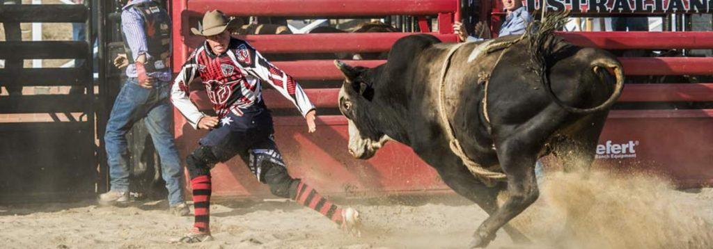 bull at rodeo