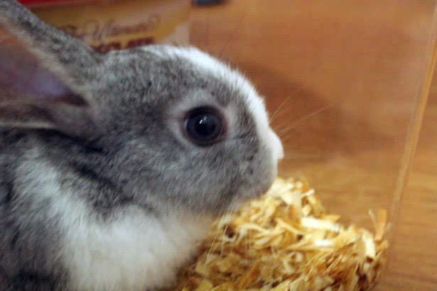 rabbit eyes