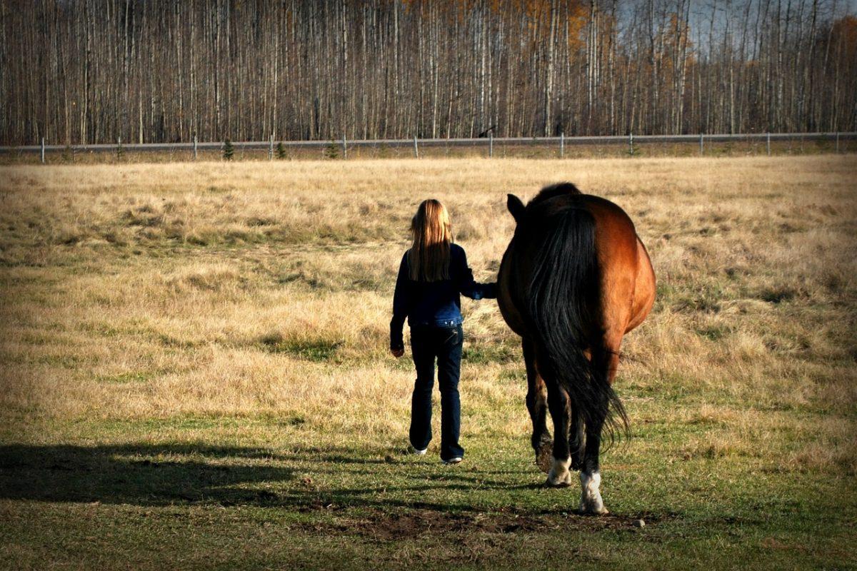 Horse Leadership